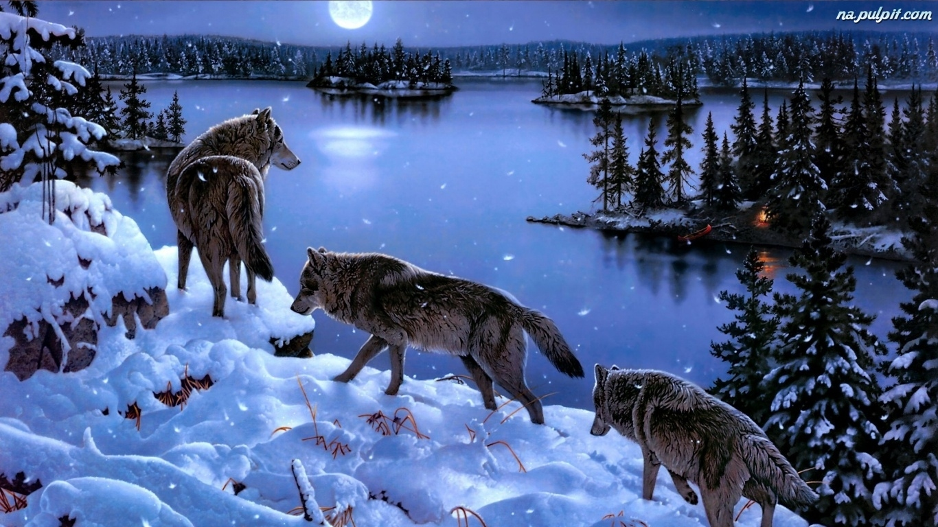 звери зимой фото